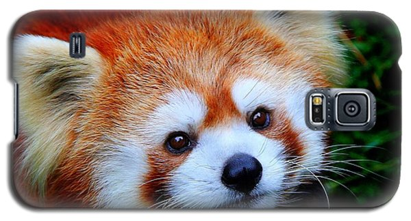 Galaxy S5 Case featuring the photograph Red Panda by Davandra Cribbie