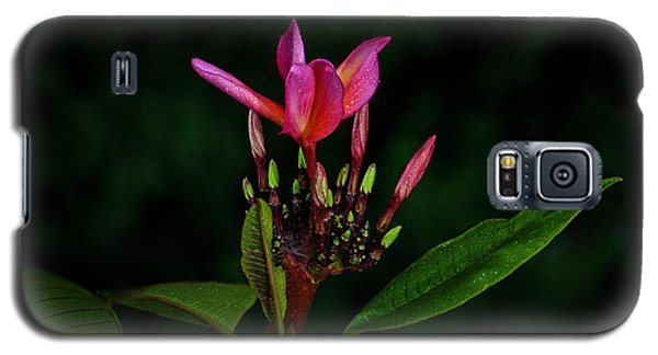 Red Plumeria Galaxy S5 Case