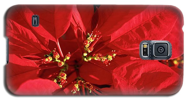 Galaxy S5 Case featuring the photograph Red Poinsettia Macro by Sally Weigand