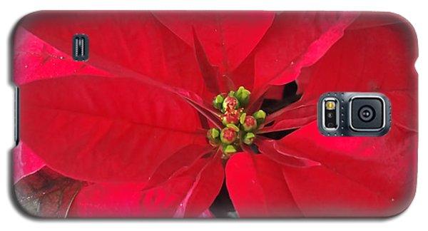 Red Poinsettia Galaxy S5 Case
