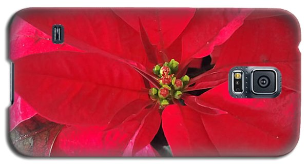 Red Poinsettia Galaxy S5 Case
