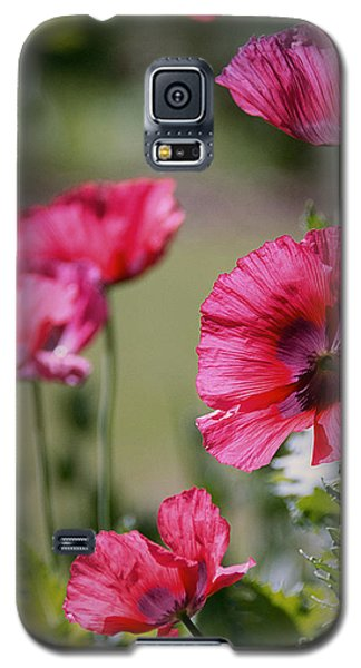 Red Poppies Galaxy S5 Case by Lisa L Silva