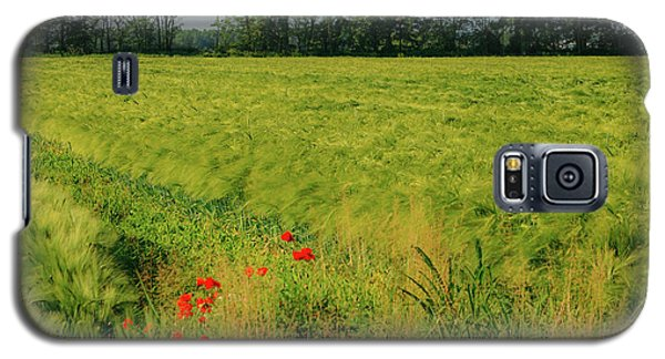 Red Poppies On A Green Wheat Field Galaxy S5 Case