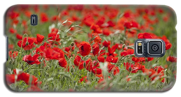 Red Poppies Galaxy S5 Case