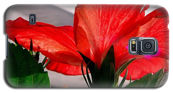 Red Poppy Galaxy S5 Case by Robert Knight
