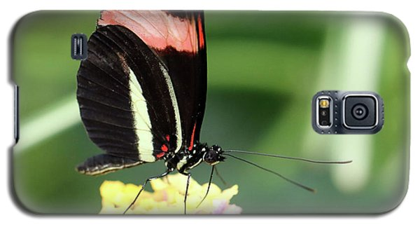 Red Postman Butterfly Heliconius Erato Cyrbia Galaxy S5 Case