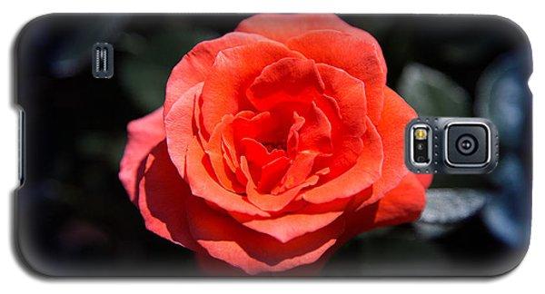 Red Rose Art Galaxy S5 Case