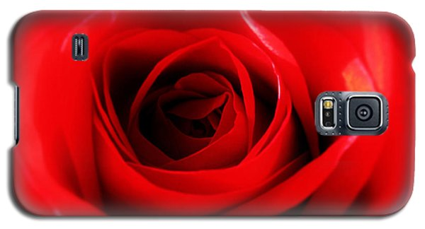 Galaxy S5 Case featuring the photograph Red Rose by Nina Ficur Feenan