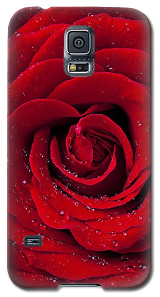 Red Rose With Dew Galaxy S5 Case