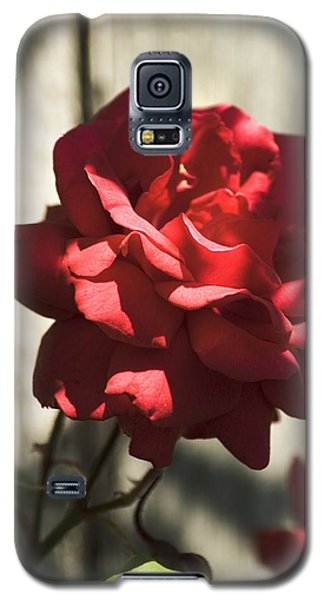 Galaxy S5 Case featuring the photograph Red Rose by Yulia Kazansky