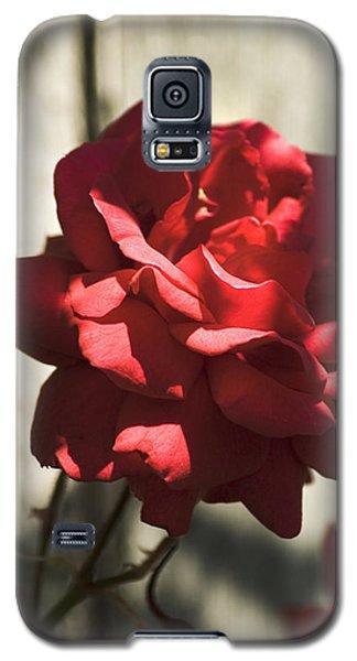 Red Rose Galaxy S5 Case by Yulia Kazansky