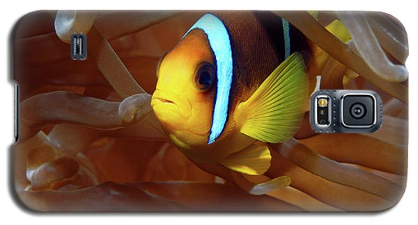 Red Sea Clownfish, Eilat, Israel 8 Galaxy S5 Case