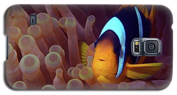 Red Sea Clownfish, Eilat, Israel 9 Galaxy S5 Case