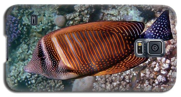 Red Sea Sailfin Tang 3 Galaxy S5 Case