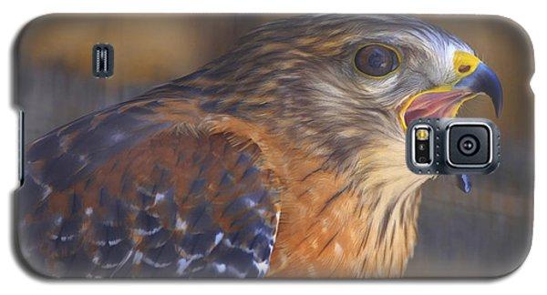 Red Shoulder Hawk Galaxy S5 Case