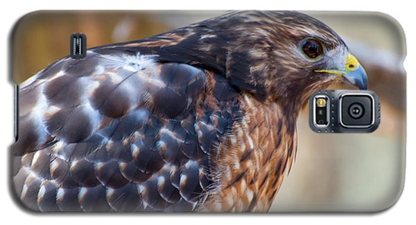 Red Shouldered Hawk 2 Galaxy S5 Case by Chris Flees