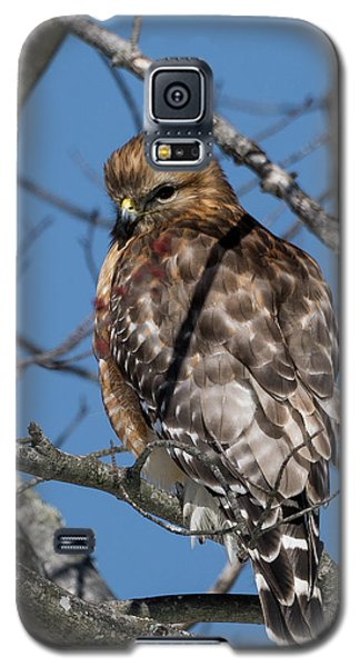 Galaxy S5 Case featuring the photograph Red Shouldered Hawk 2017 by Bill Wakeley