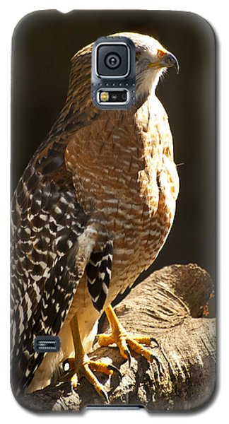 Red-shouldered Hawk Galaxy S5 Case