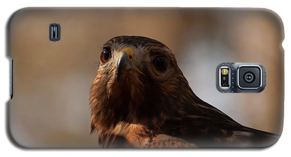 Red Shouldered Hawk Close Up Galaxy S5 Case by Chris Flees
