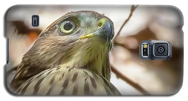 Red-shouldered Hawk Fledgling 3 Galaxy S5 Case
