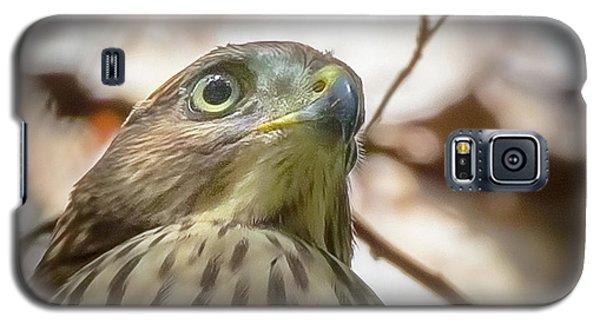 Red-shouldered Hawk Fledgling 3 Galaxy S5 Case