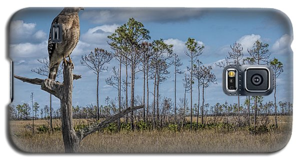 Red Shouldered Hawk In The Florida Everglades Galaxy S5 Case