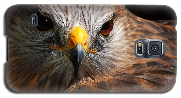 Red-shouldered Hawk Galaxy S5 Case by Lorenzo Cassina
