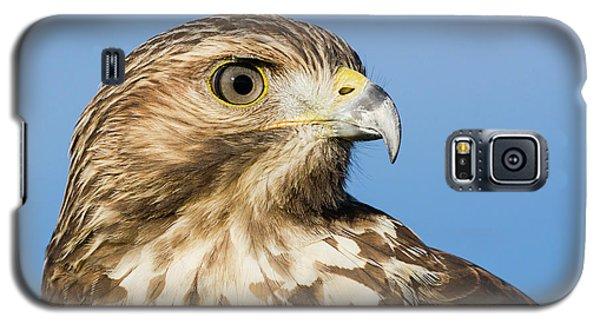 Red-shouldered Hawk Portrait - Winged Ambassador Galaxy S5 Case
