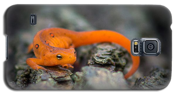 Red Spotted Newt Galaxy S5 Case by Chris Bordeleau