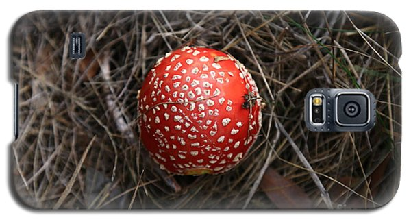 Red Spotty Toadstool Galaxy S5 Case