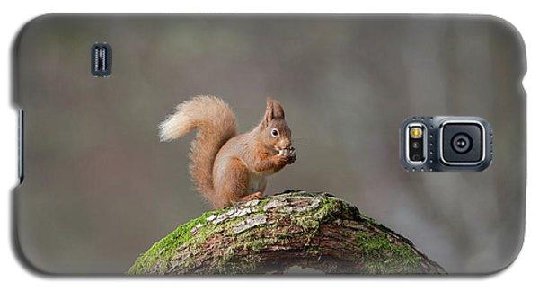 Red Squirrel Eating A Hazelnut Galaxy S5 Case