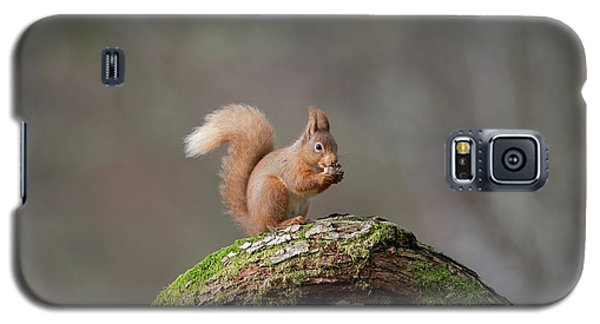 Red Squirrel Eating A Hazelnut Galaxy S5 Case