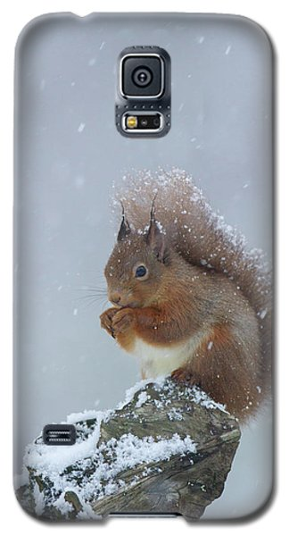 Red Squirrel In A Blizzard Galaxy S5 Case