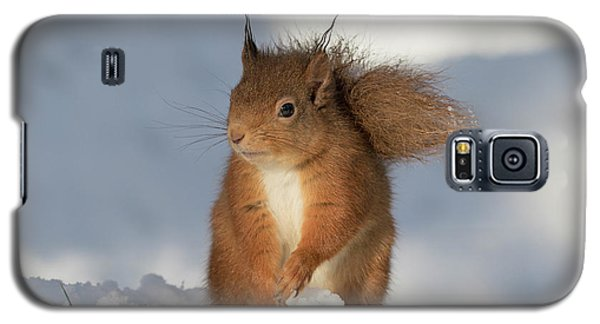 Red Squirrel In The Snow Galaxy S5 Case
