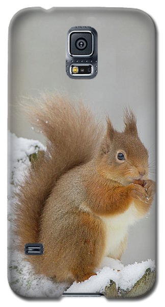 Red Squirrel In The Snow Side On Galaxy S5 Case