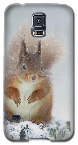 Red Squirrel In Winter Galaxy S5 Case