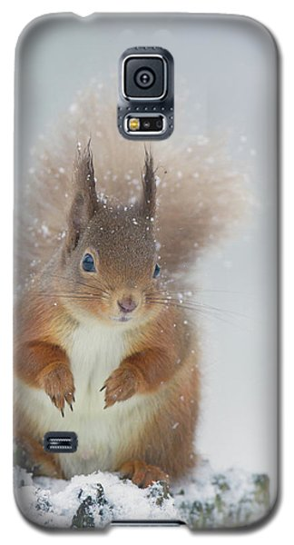 Red Squirrel In Winter Galaxy S5 Case