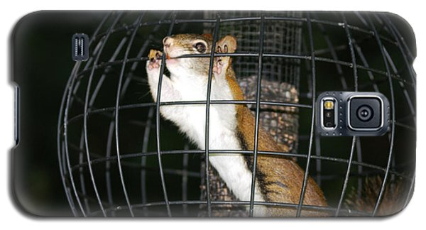 Red Squirrel Jail Galaxy S5 Case