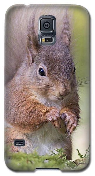 Red Squirrel - Scottish Highlands #1 Galaxy S5 Case