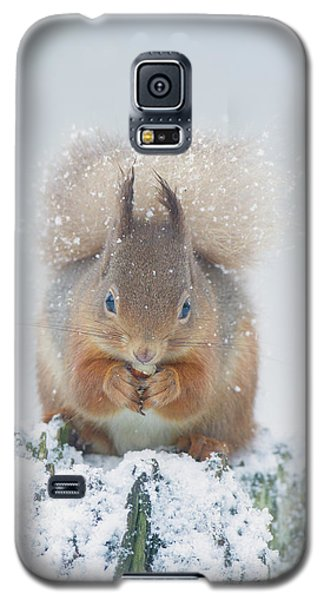 Red Squirrel Nibbles A Nut In The Snow Galaxy S5 Case