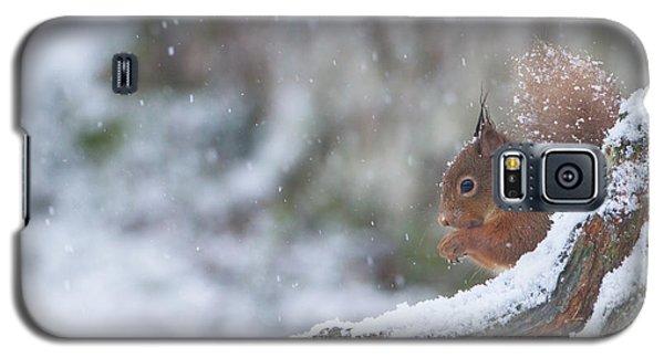 Red Squirrel On Snowy Stump Galaxy S5 Case