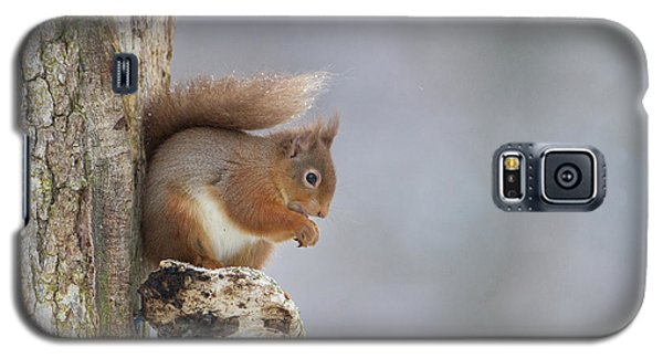 Red Squirrel On Tree Fungus Galaxy S5 Case