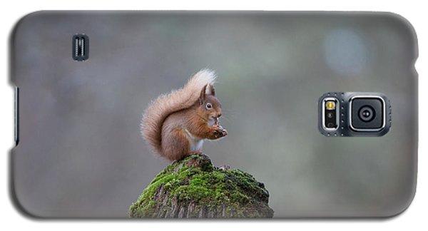Red Squirrel Peeling A Hazelnut Galaxy S5 Case