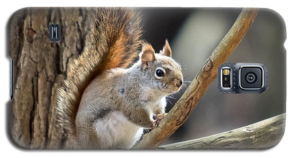 Red Squirrel Galaxy S5 Case