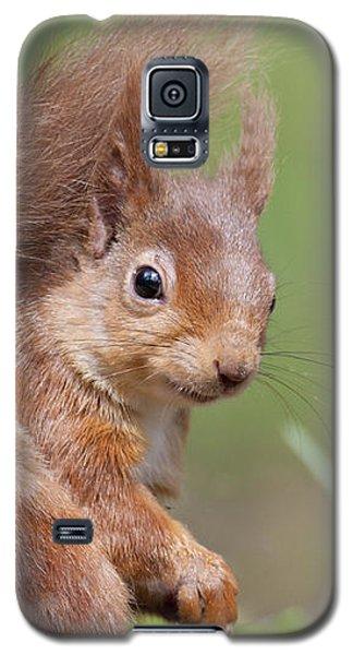 Red Squirrel - Scottish Highlands  #17 Galaxy S5 Case