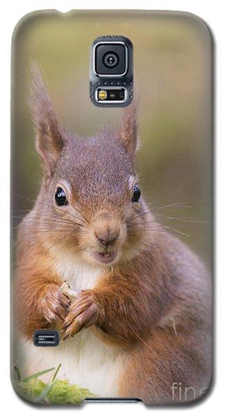 Red Squirrel - Scottish Highlands #18 Galaxy S5 Case