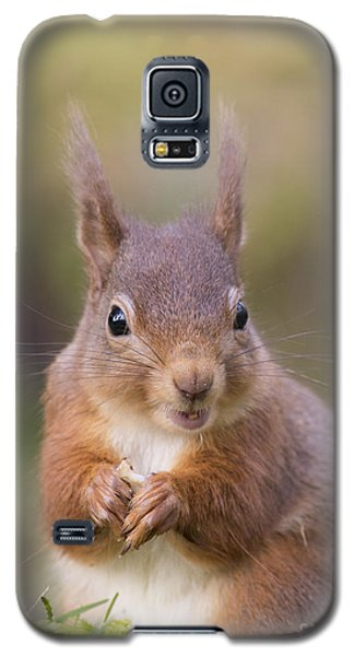Red Squirrel - Scottish Highlands #18 Galaxy S5 Case