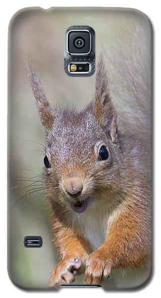 Red Squirrel - Scottish Highlands #26 Galaxy S5 Case