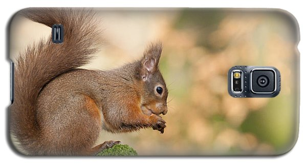 A Moment Of Meditation - Red Squirrel #27 Galaxy S5 Case