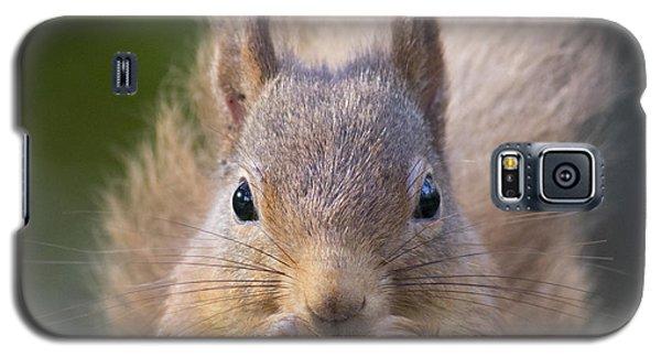 Red Squirrel - Scottish Highlands #28 Galaxy S5 Case